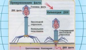 Геннадий Шилин, ЭкоБиопсихология, коррекция мировоззрения
